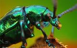 نقش حشرات موذی در افزایش گرمای زمین