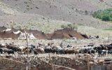 ۱۱ درصد جمعیت استان را عشایر تشکیل میدهند