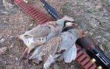 دستگیری شکارچی غیر مجاز در آبدانان