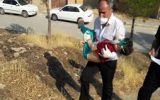 مصدومیت ۲۱۷ نفر در اثر حادثه انفجار گاز کلر در روستای زنجیره علیا