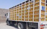 ۱۴ تن مرغ زنده خارج از شبکه توزیع در ایلام کشف شد