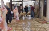 کشتار دام قربانی خارج از کشتارگاههای مجاز ایلام ممنوع