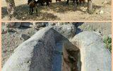 اعلام جرم علیه پرورش دهندگان اسب برای تخریب محیط زیست