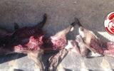 دستگیری ۲ شکارچی متخلف غیربومی در منطقه حفاظت شده مانشت و قلارنگ ایلام