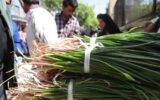 برداشت گیاهان خوراکی در ایلام ممنوع است