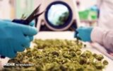 کشف هزار و ۱۵۰ تن انواع مخدر در یک سال