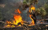 کاهش  درصد حریق در جنگل های ایلام